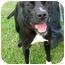 Photo 3 - American Pit Bull Terrier Mix Dog for adoption in Brookville, Indiana - Brahm