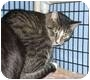 Adopt A Pet :: Barn Cats - Colmar, PA