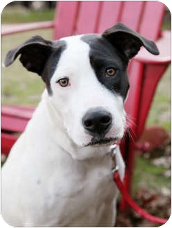 Terrier (Unknown Type, Medium) Mix Dog for adption in Garland, Texas - Annie