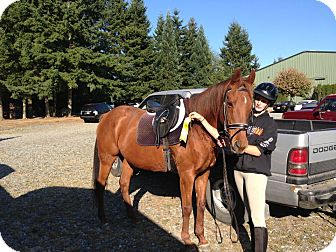 "Thoroughbred Mix for adoption in Everett, Washington - Red Rodeo ""Rhodi"""