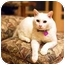 Photo 1 - Domestic Mediumhair Cat for adoption in Pasadena, California - Guy