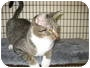 Adopt A Pet :: Cinderella - Deerfield Beach, FL