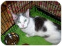 Adopt A Pet :: Brady - Colmar, PA