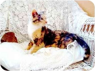 Calico Cat for Sale in Columbus, Georgia - Suzie