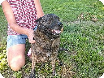Australian Cattle Dog Mix Dog for adption in Rayville, Louisiana - Graycee