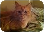Adopt A Pet :: Peaches - Mississauga, Ontario, ON