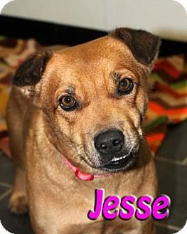 Shepherd (Unknown Type) Mix Dog for adption in Midland, Texas - Jesse
