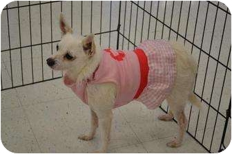 Terrier (Unknown Type, Medium) Mix Dog for adption in Chino, California - Estrella