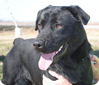 Labrador Retriever Mix Dog for adption in Tunica, Mississippi - Tojo