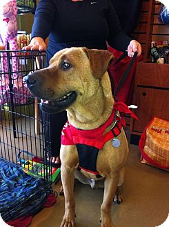 Shar Pei Mix Dog for adption in Mira Loma, California - Zak