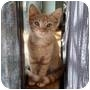 Adopt A Pet :: Applejack - Round Rock, TX
