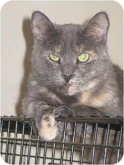 Domestic Mediumhair Cat for adoption in Rancho Cordova, California - Lucy
