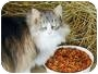 Adopt A Pet :: Barn Cats-Male/Fem - blairsville, GA