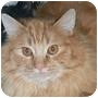 Adopt A Pet :: Theo - Ottawa, ON