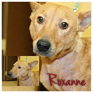 Basenji Mix Dog for Sale in Westland, Michigan - Roxanne