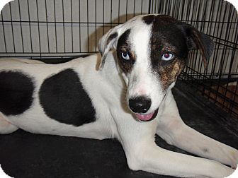 Border Collie Mix Dog for adption in Port Isabel, Texas - Princess