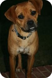Boxer Mix Dog for adption in Wytheville, Virginia - Goofy Gertie Girl