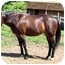 Photo 3 - Standardbred for adoption in Washington, Connecticut - Bow