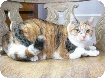 Calico Cat for Sale in Columbus, Georgia - Sally