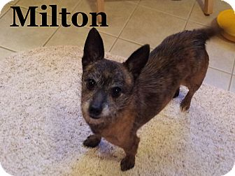 Brussels Griffon/Chihuahua Mix Dog for Sale in London, Kentucky - Milton and Clyde
