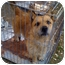 Photo 2 - Terrier (Unknown Type, Medium)/Corgi Mix Dog for adoption in Fowler, California - Baxter