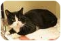 Adopt A Pet :: Abner - crofton, MD