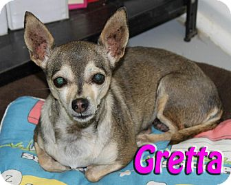 Chihuahua Mix Dog for Sale in Midland, Texas - Gretta