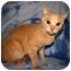 Photo 3 - Domestic Shorthair Cat for adoption in Oxford, New York - DJ