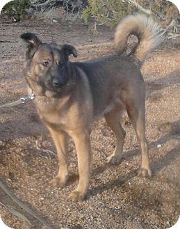 Shepherd (Unknown Type) Mix Dog for adption in San Diego, California - Domingo URGENT