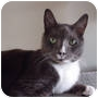 Adopt A Pet :: Mickey *declawed* - Toronto, ON