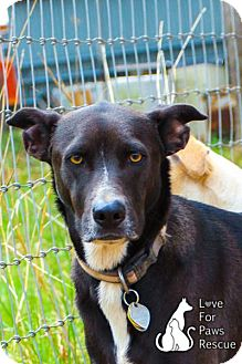 Shepherd (Unknown Type) Mix Dog for adption in Spring Branch, Texas - Tiny Tim