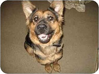 Shepherd (Unknown Type) Dog for adption in Visalia, California - Molly
