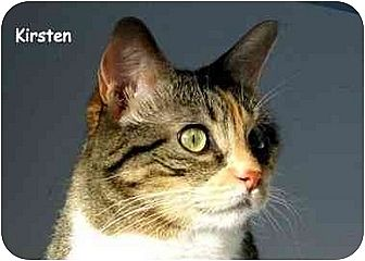Calico Cat for adoption in AUSTIN, Texas - Kirsten