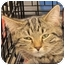 Photo 1 - Domestic Shorthair Cat for adoption in Harrisburg, North Carolina - Charlie
