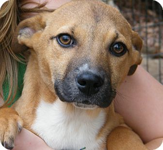 Husky Mix Puppy for adption in Anywhere, Connecticut - Nikki adoption fee reduced