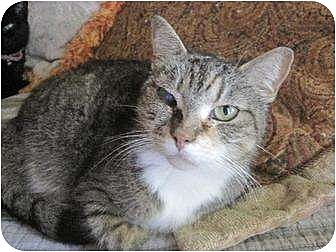 Calico Cat for adoption in Greenville, North Carolina - Penny