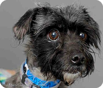 Terrier (Unknown Type, Small) Mix Dog for adption in Long Beach, California - Monte