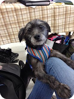 Terrier (Unknown Type, Small) Mix Dog for adption in Brea, California - Wayne
