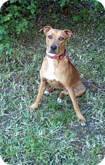 Hound (Unknown Type) Mix Puppy for adption in hollywood, Florida - mina