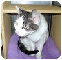 Adopt A Pet :: Spangle - Colmar, PA