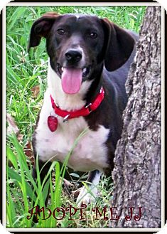 Hound (Unknown Type) Mix Dog for adption in Starkville, Mississippi - JJ