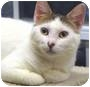 Adopt A Pet :: Katey - St. Clements, ON