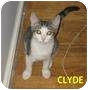 Adopt A Pet :: Clyde - New York, NY