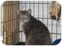 Adopt A Pet :: Playgirl - Pittsboro, NC