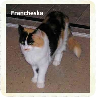 Calico Cat for adoption in Catasauqua, Pennsylvania - Francheska