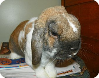 Lop-Eared Mix for adoption in North Gower, Ontario - Crisper
