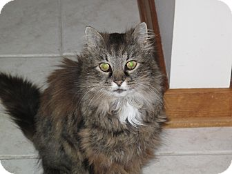 Domestic Longhair Cat for adoption in Port Republic, Maryland - Bonnie Raitt