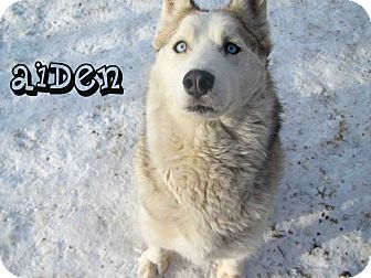 Husky Mix Dog for Sale in Hamilton, Montana - Aiden