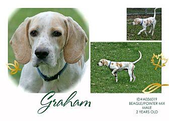 Pointer/Beagle Mix Dog for adoption in Lufkin, Texas - Graham