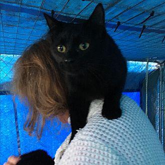Adopt A Pet :: Sammy  - Snow Hill, NC